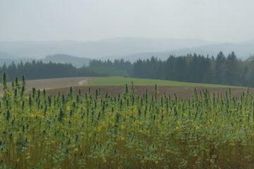 Frankenwald Hanf