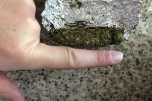 4/20 Feiertag der Cannabis Kultur - nicht nur Genuss und Event