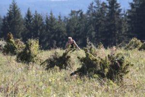 Hanfernte im Frankenwald