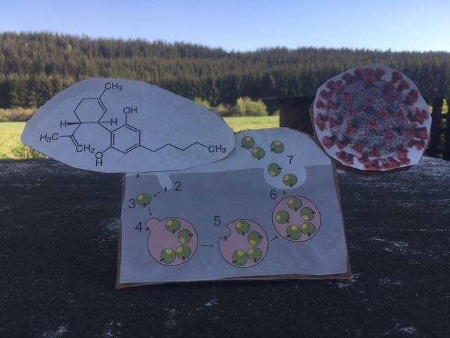 Stammzellenrakete voller CBD-Moleküle gegen die Corona-Pandemie??!