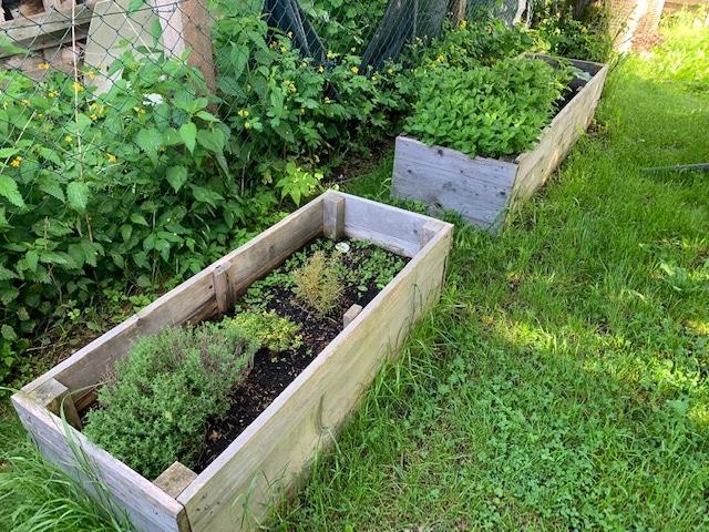 Kräuterbeet: Kräuter sind Alleskönner - Kräuteranbau im eigenen Garten
