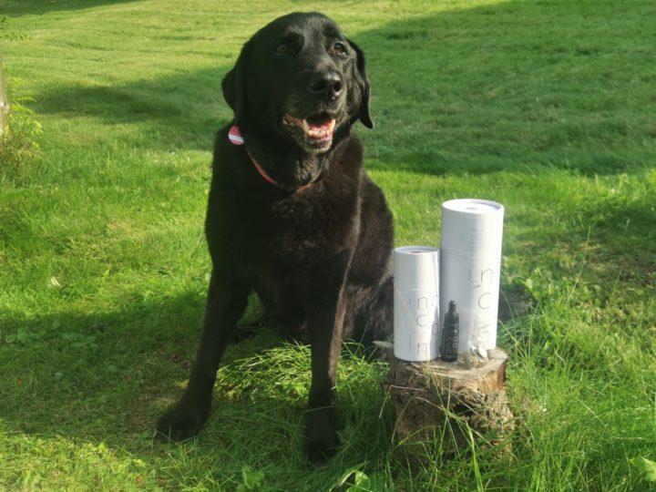 Nacani CBD Öl und Hanfsnacks für Hunde mit Fisch, Huhn oder vegan