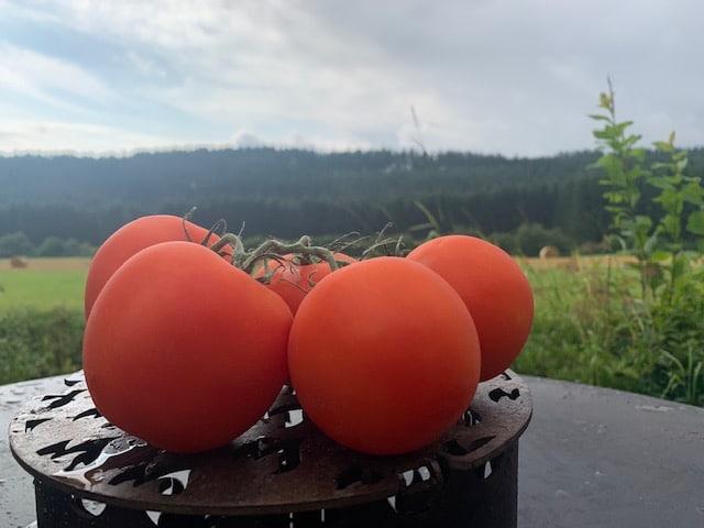 Tomaten - Eigenschaften und Verwendung von Tomatensorten