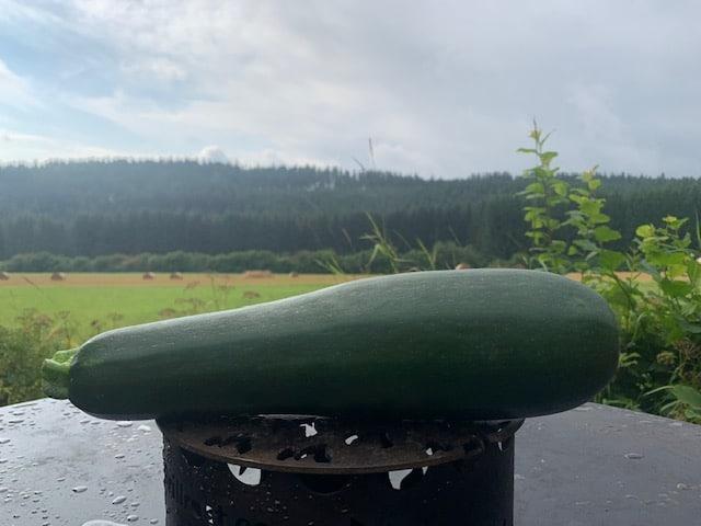 Zucchini anpflanzen und gekocht, gegrillt, gebacken oder auch roh essen